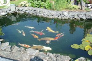 Biện pháp chống thấm hồ cá cảnh cho gia đình